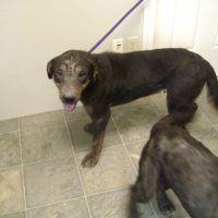 Neutered Male Mixed Breed 4002