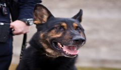 Police Dogs for Patrol and Detection