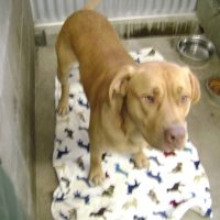 Male Mixed Breed 0308