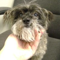 NM) Terrier Mix 3705