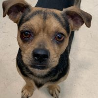 MALE MIXED BREED 4052