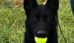 K9 – Police Dogs for Patrol and Detection
